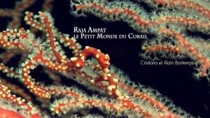 Raja Ampat Le petit Monde du Corail